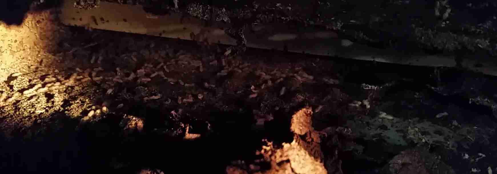 Caboolture Pest Control Termite Treatments