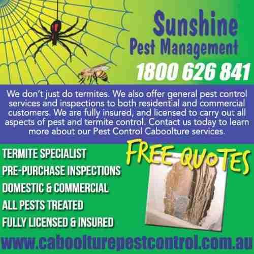 Sunshine Pest Man