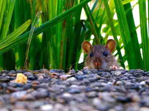 Morayfield Pest Control