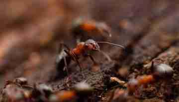 Termite Inspection Bellmere